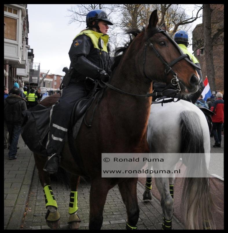 Politiepaard (C) Ronald Puma