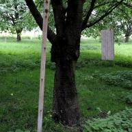 Vogels worden afgeschrikt door op een metalen plaat te slaan of met een stok de boom te schudden.