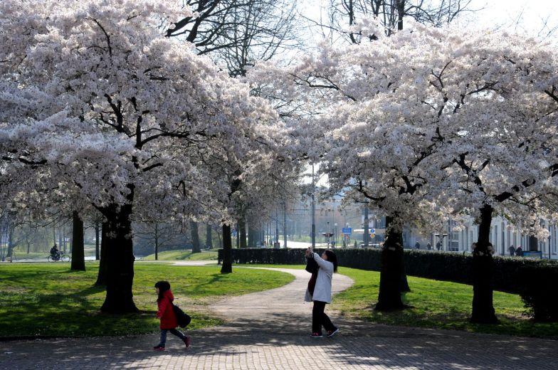 Voorjaarsbloesem aan de Velperbinnensingel.
