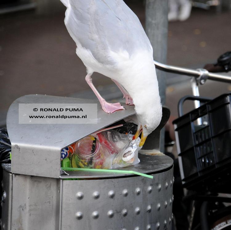 Meeuwen 01 (C) Ronald Puma.750