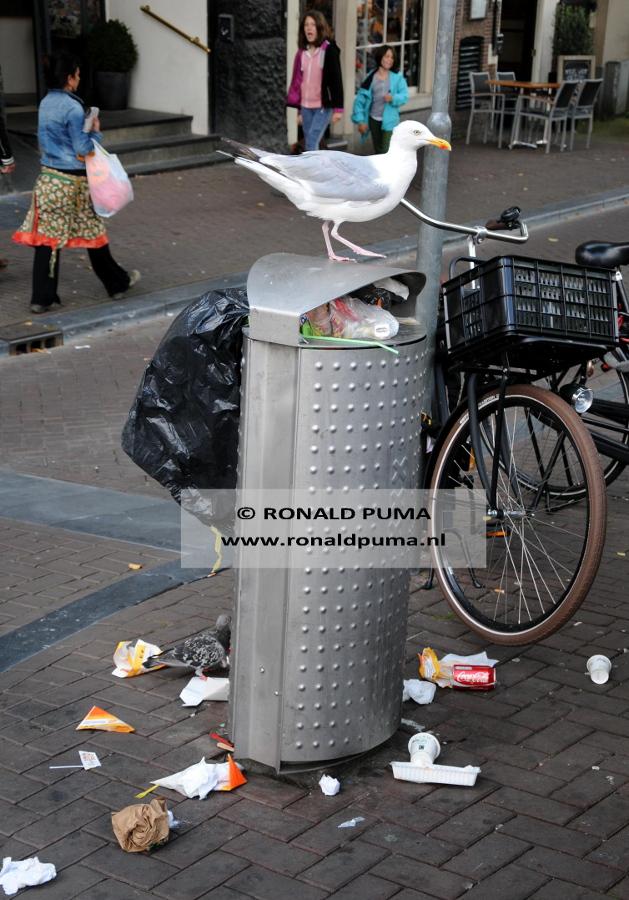 Meeuwen 03 (C) Ronald Puma