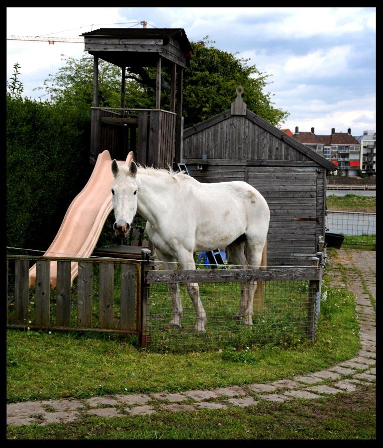 White Horse © Ronald Puma