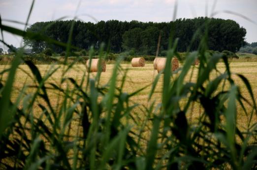 Hooirollen (C) Ronald Puma PIC_0035.900