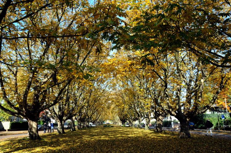 PIC_0046.750 straatfotografie (C) Ronald Puma