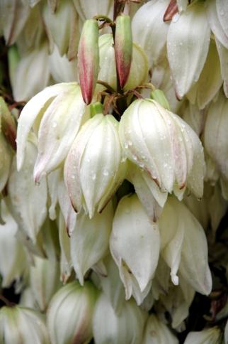 mooie witte bloemen,