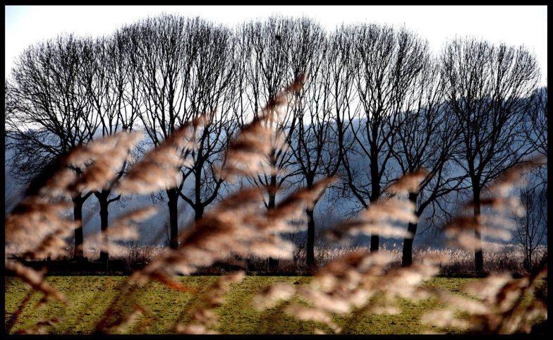 Landschap met bomen en riet. (C) Ronald Puma.