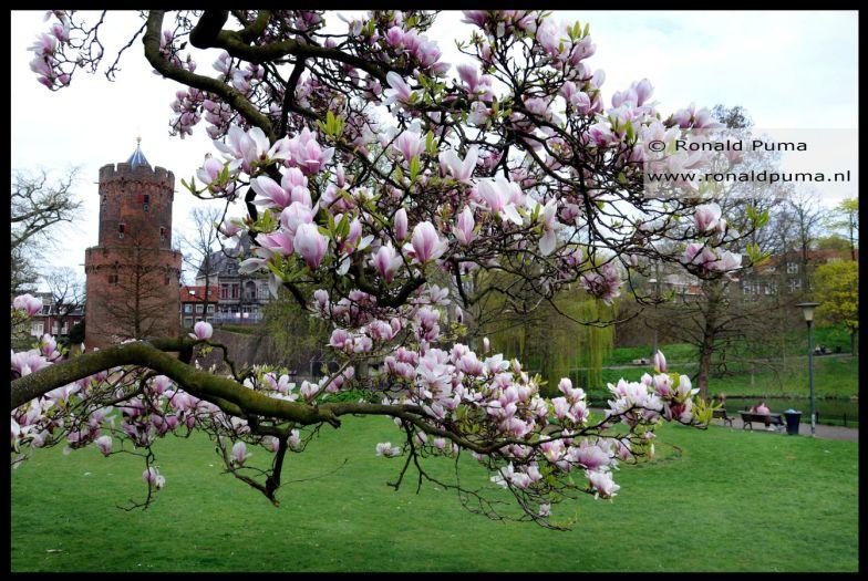 Voorjaar in het Kronenburgerpark Nijmegen, Netherlands. (C) Ronald Puma