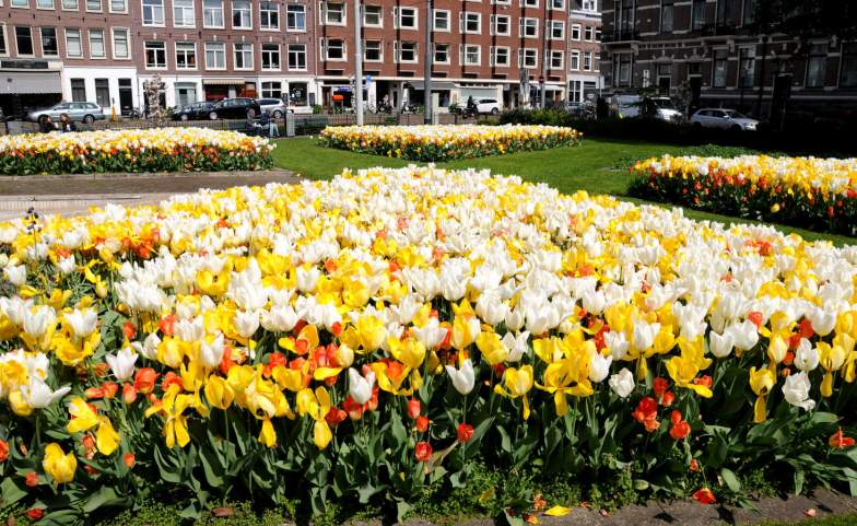 Tulpen uit Amsterdam / Tulips from Amsterdam.