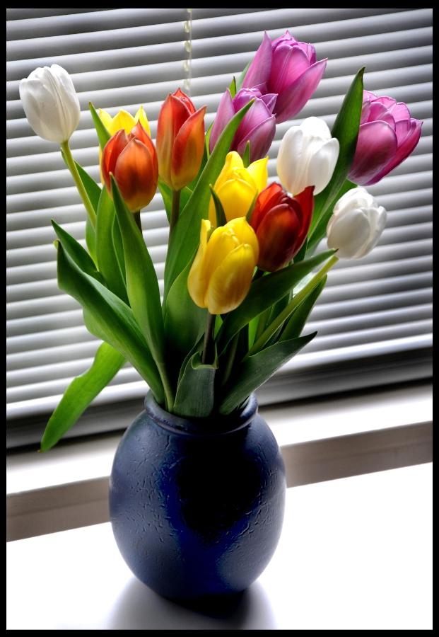 Tulpen Tulips (C) Ronald Puma