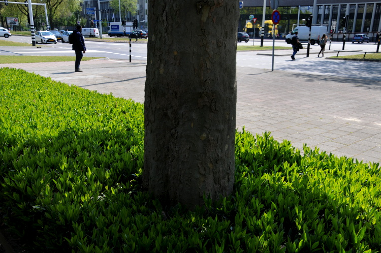 PIC_0025.750 StreetLife (C) Ronald Puma