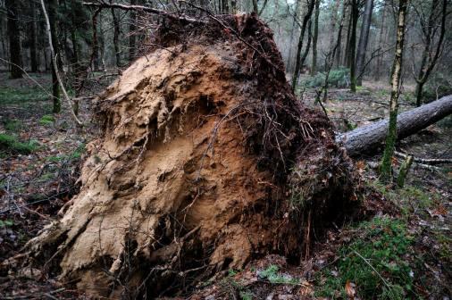 PIC_0104.800 storm 18.01.2018 (C) Ronald Puma