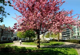 De voorjaarsbloesem is uit de bomen geknald op de warmste 19 april ooit.