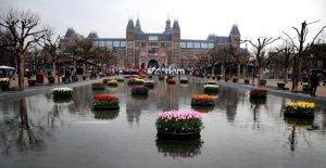 Tulpen achter het Rijksmuseum.