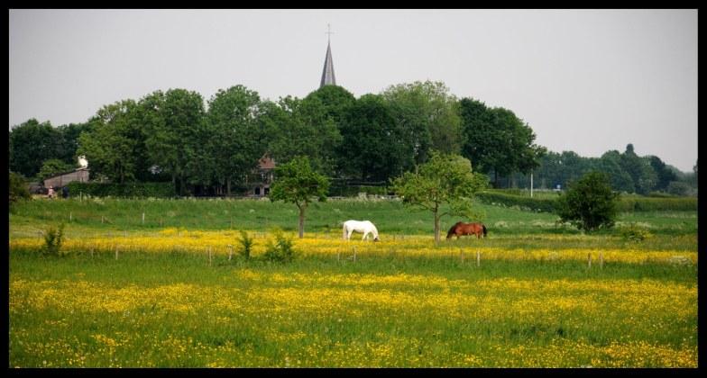 2 paarden in een weiland. Ooijpolder/Persingen/Nijmegen.