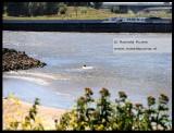 Zwemmen vlakbij een krib terwijl er een schip voorbij vaart is erg gevaarlijk.