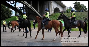 Politiepaarden Nijmegen.