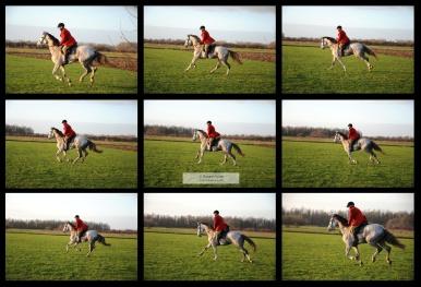 Naar Eadweard Muybridge (1830-1904), The Horse in Motion. (Bekijk deze foto op volledige grootte).