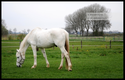 Ooijpolder Netherlands (C) Ronald Puma 01.2
