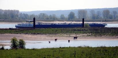 De uiterwaarden van de Waal Nijmegen/Lent.