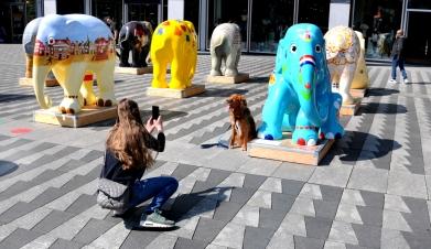 Kunstproject met 20 olifantjes. Een deel van de opbrengst is voor de olifanten bestemd. De internationale naam is Elephant Parade.