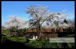 Begraafplaats Moscowa Arnhem. Er overlijden mensen door het Coronavirus.