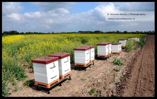 Bijenkasten biodiversiteit (C) Ronald Puma 01