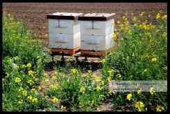 Bijenkasten biodiversiteit (C) Ronald Puma 02