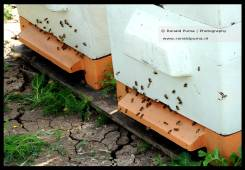 Bijenkasten biodiversiteit (C) Ronald Puma 04